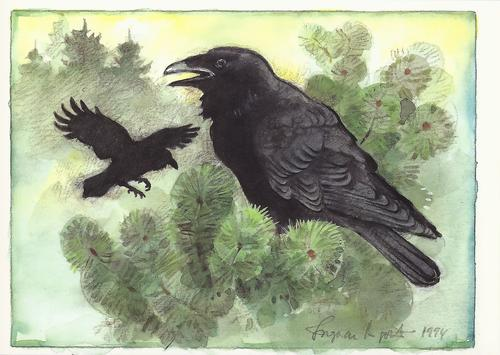 raven - picture 1