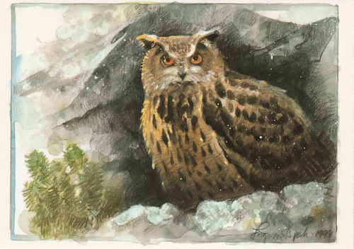 eagle-owl - picture 1
