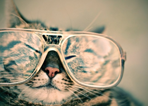 cat wearing glasses - picture 1