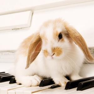 Postcard rabbit on the piano keys