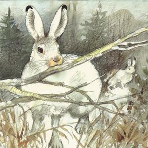 Postcard mountain hare