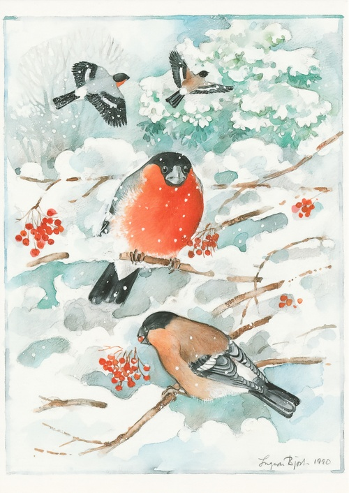 bullfinches - picture 1