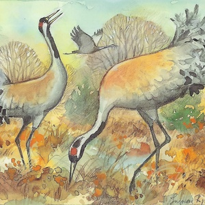 Collection ingvar björk's wild animals - cranes