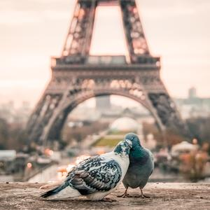 Postcard love in paris