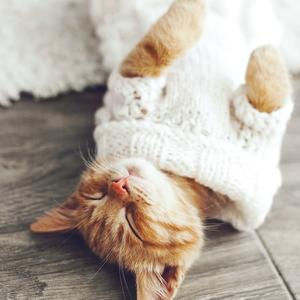 Postcard kitten wearing knitted sweater