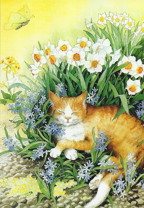 red cat and daffodils - picture 1