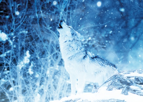 winter howl - picture 1