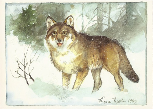 gray wolf - picture 1