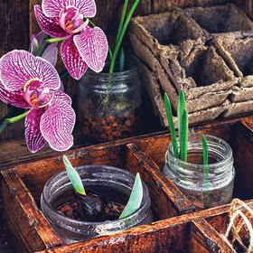 seedlings and orchid - picture 1