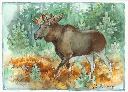 moose - picture 1