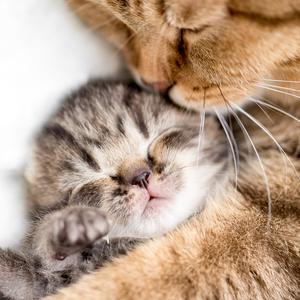Postcard sleeping kitten and his mum