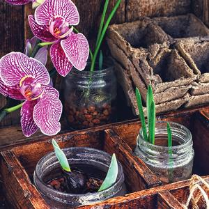 Postcard seedlings and orchid