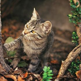 cat in a garden - picture 1