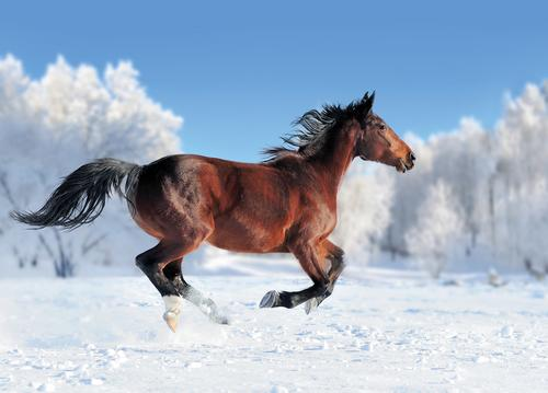 horse on winter field - picture 1