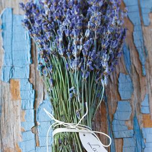 Postcard lavender bunch