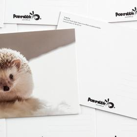 hedgehog - picture 2