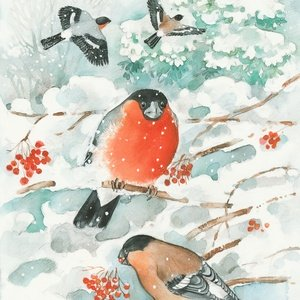 Collection ingvar björk's wild animals - bullfinches