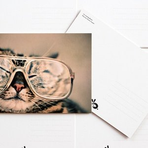 cat wearing glasses - picture 2