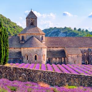 Postcard lavender fields at senanque monastery