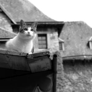 Postcard cat on a roof