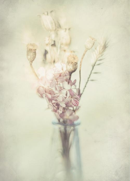 dried flowers - picture 1