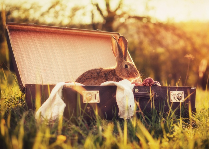 rabbit in a suitcase - picture 1