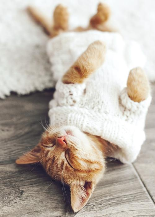 kitten wearing knitted sweater - picture 1