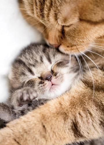 sleeping kitten and his mum - picture 1