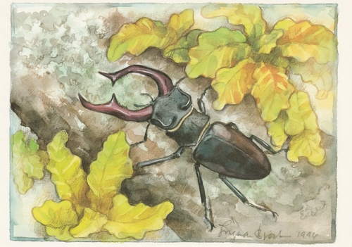 stag beetle - picture 1
