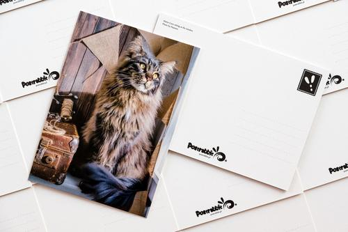 maine coon - picture 2