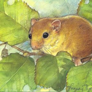 Postcard forest dormouse