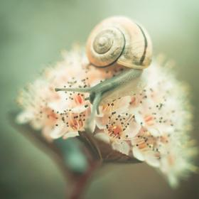 snail - picture 1
