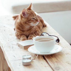 Postcard cat, coffee and book