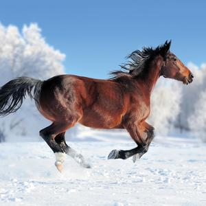 Postcard horse on winter field