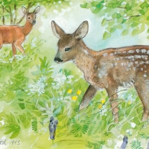young deers - picture 1