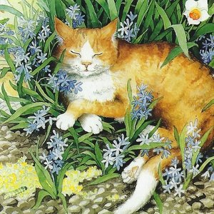 Collection garden - red cat and daffodils