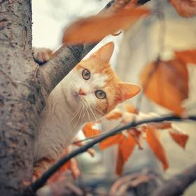 Collection zoran's cats - autumn camouflage