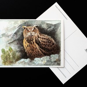 eagle-owl - picture 2